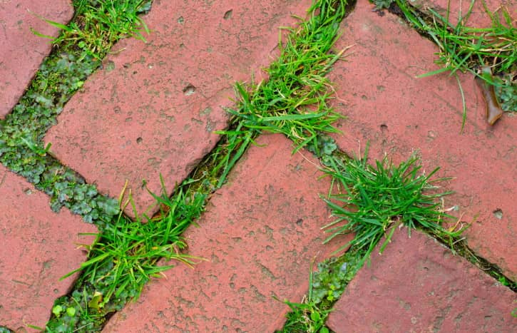 weeds between pavers