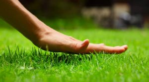 The best organic lawn fertilizer