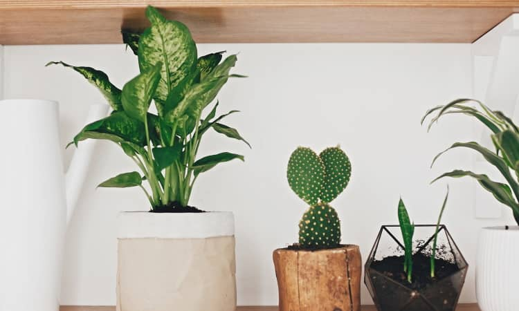 The best fertilizer for indoor plants