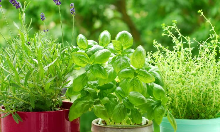 The best potting soil for herbs