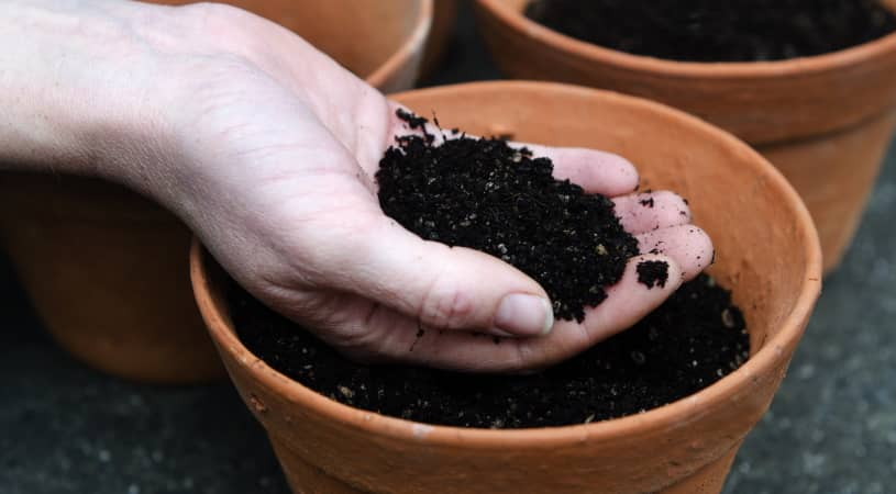 choosing the best potting soils