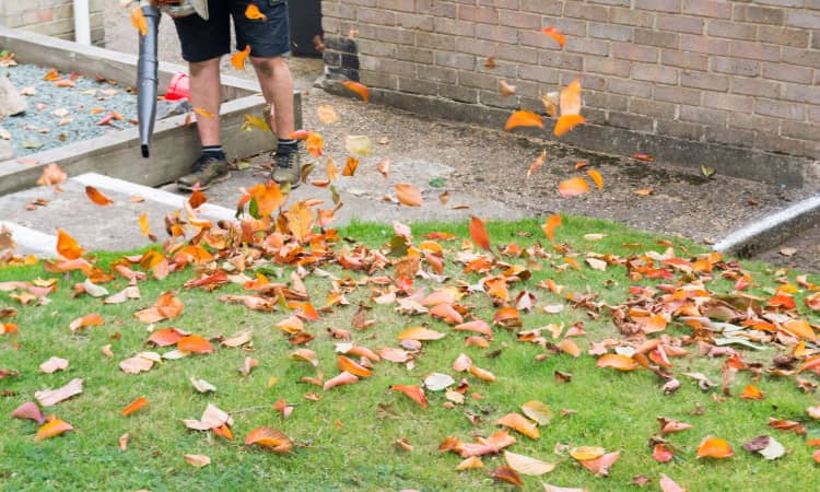 Blowing leaves from the lawn