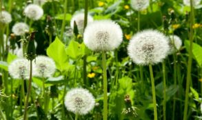 The 10 Best Weed Killers For Large Areas