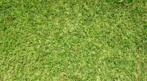 The 7 Best Weed Killers For St. Augustine Grass Lawns