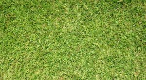 The Best Weed Killer For St. Augustine Grass