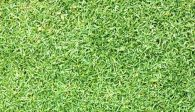 The 5 Best Weed Killers For Zoysia Grass