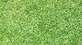The Best Weed Killer For Zoysia Grass