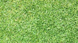 Best weed killer for zoysia grass lawn