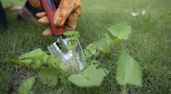How To Get Rid Of A Lawn Full Of Weeds Without Killing Grass