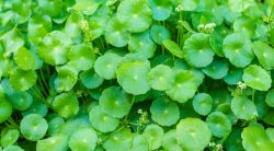 35 Common Types Of Weeds: Identification With Names & Pictures