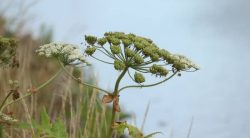 11 Tall Weeds With Thick Stalks