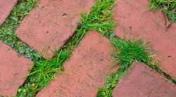 The Best Tool To Remove Weeds Between Pavers – Our 5 Favorites