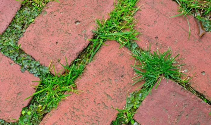 Tool to remove weeds between pavers