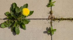The 8 Best Weed Killers For Patios & Pavers